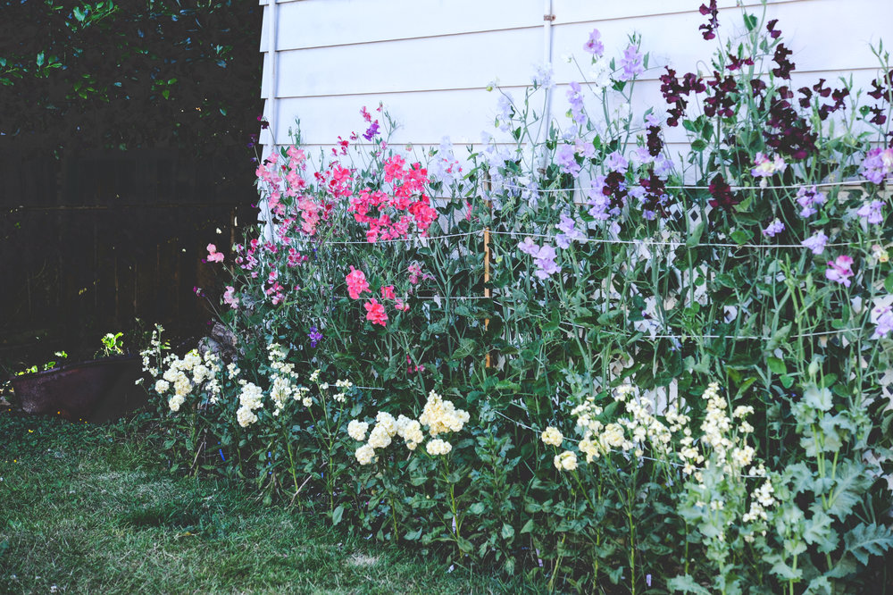 You don't need a ton of space! This 2x8 foot bed along a house was ample space to grow flowers.