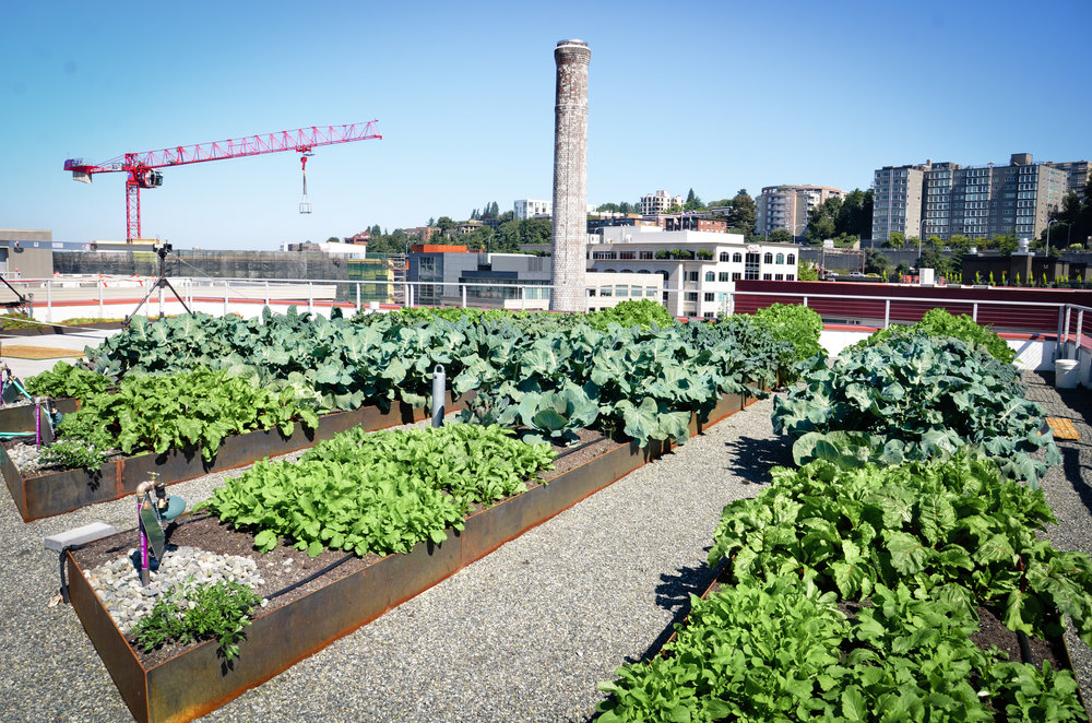 Stackhouse Seattle_Seattle Urban Farm Co.