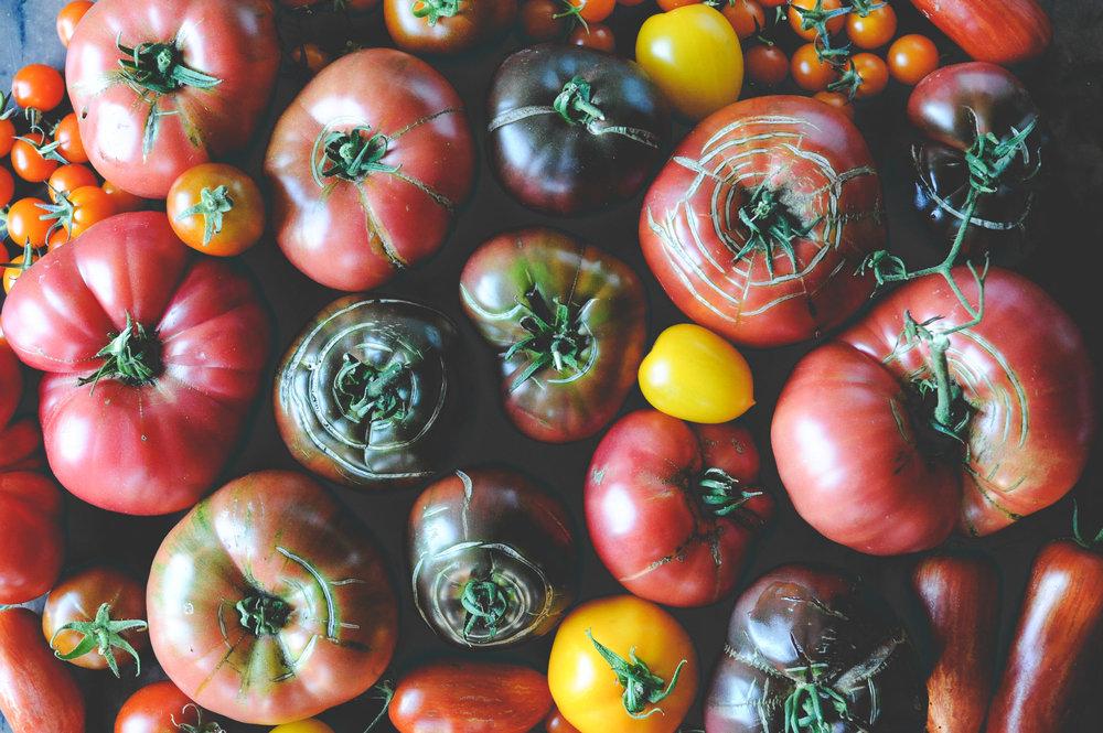Tomatoes_Seattle Urban Farm Co.