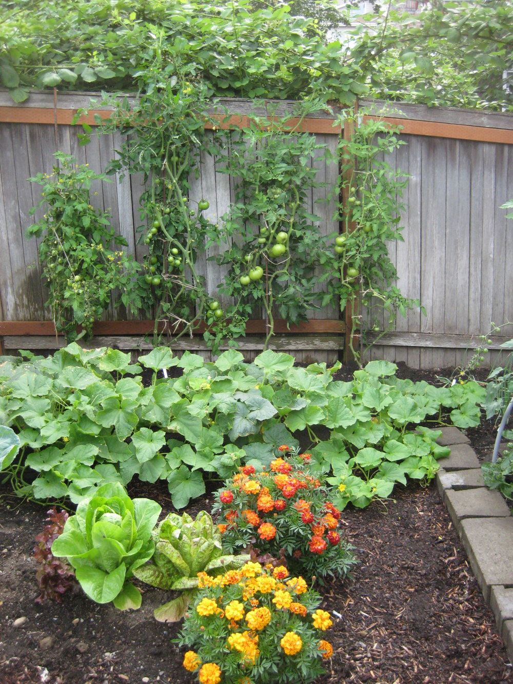 Tomatoes rebar trellis.jpg