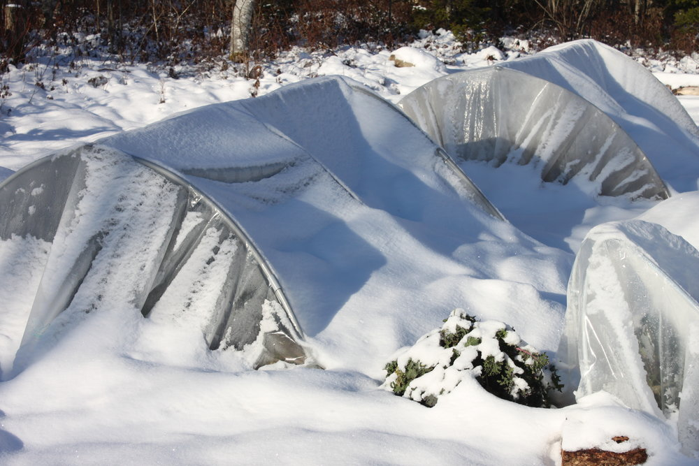 Poly low-tunnels under snow