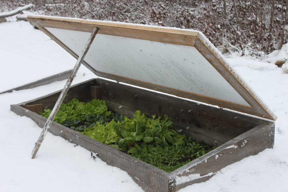 Open cold frame with polycarbonate panels