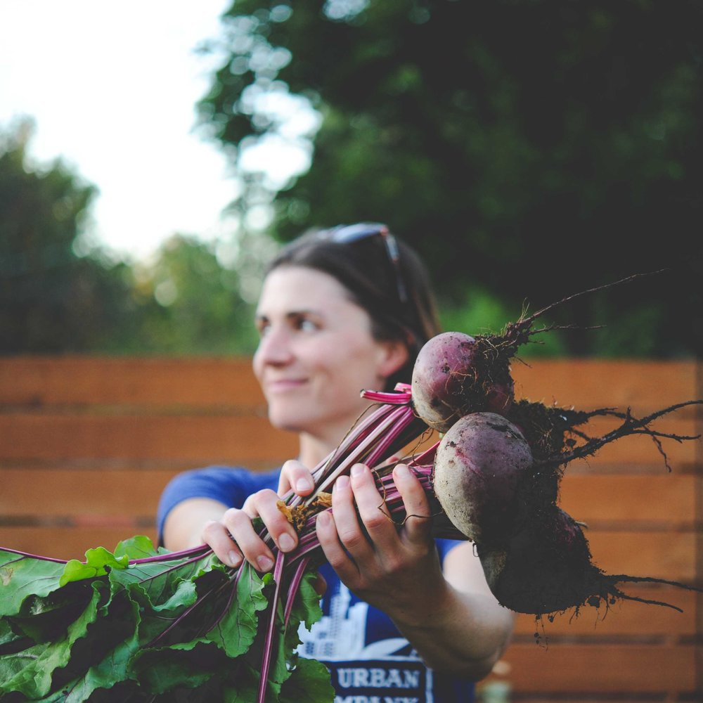 Hilary's Early Wonder beets
