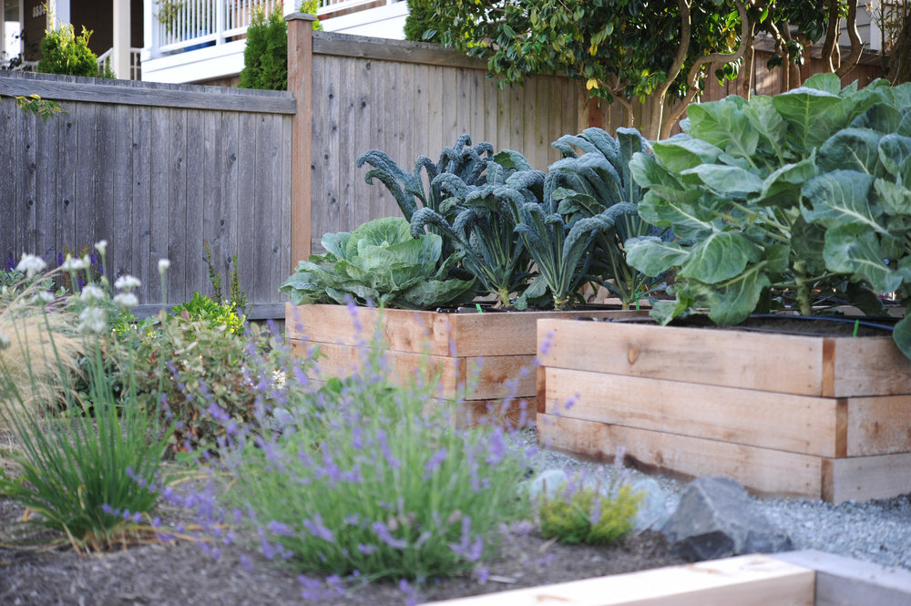 Seattle Urban Farm Co._4x4 raised beds.jpg