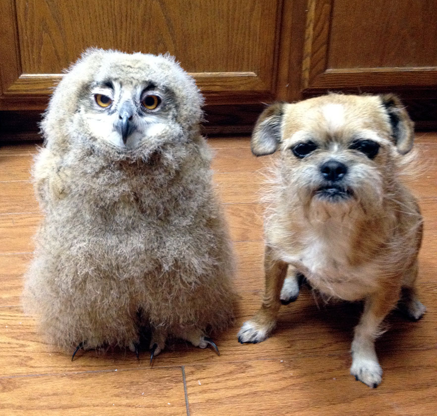 Willy Nelson and Owl-impersonating Dog