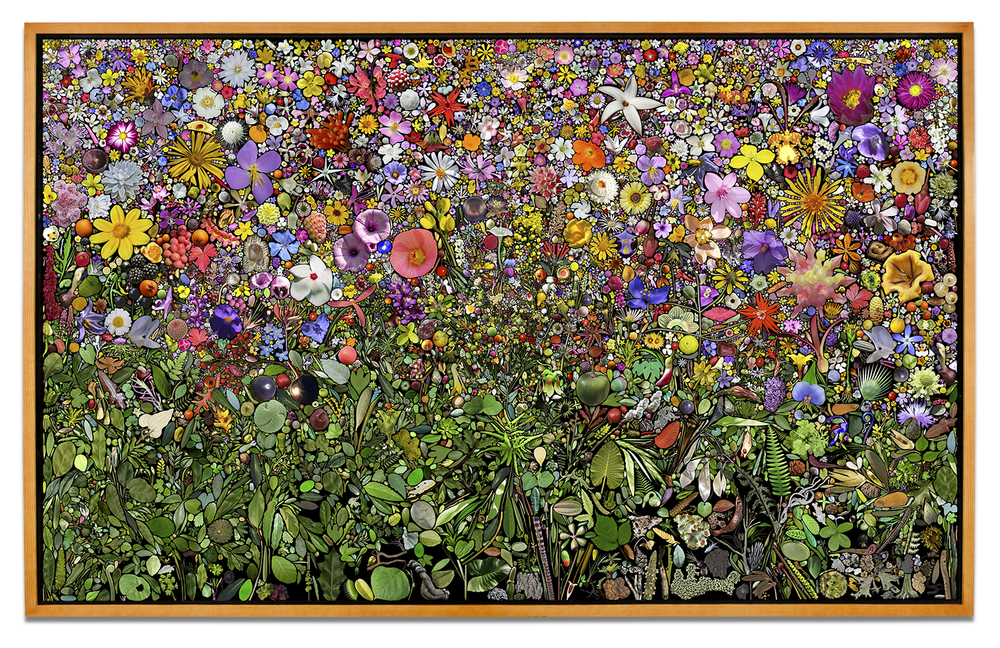 Simmons & Burke, U.S. Plant Collection Palette, 2013, pigment print, 99 x 159 inches