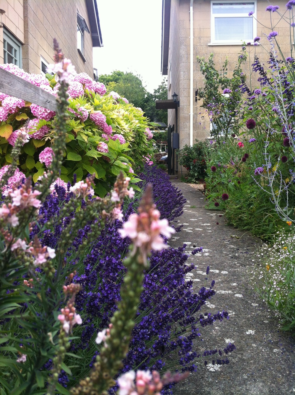 Soft planting of purples, blues, pinks and silvers