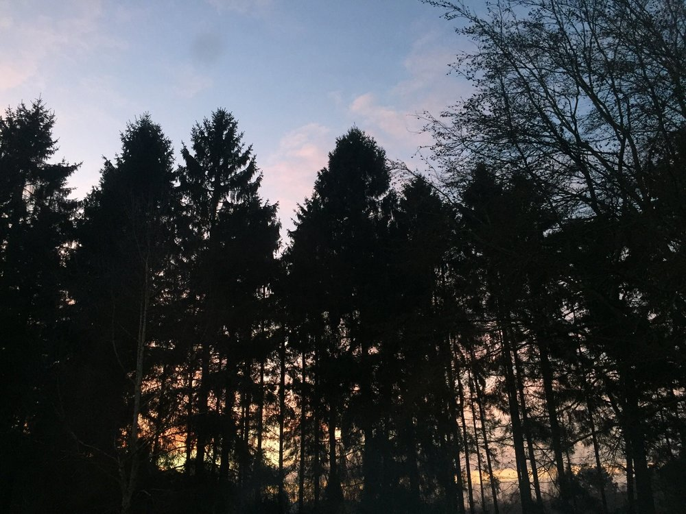 Sunset fir trees