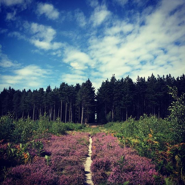 Blue sky. Pink carpet. #thewarren #summer #thebestofnorfolk