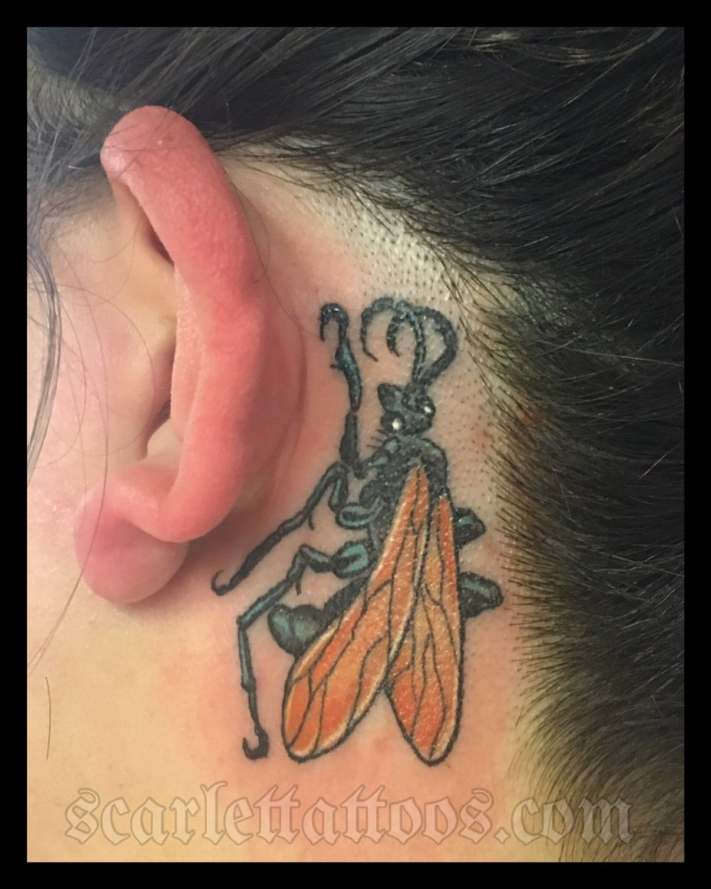 Tarantula Hawk tattoo