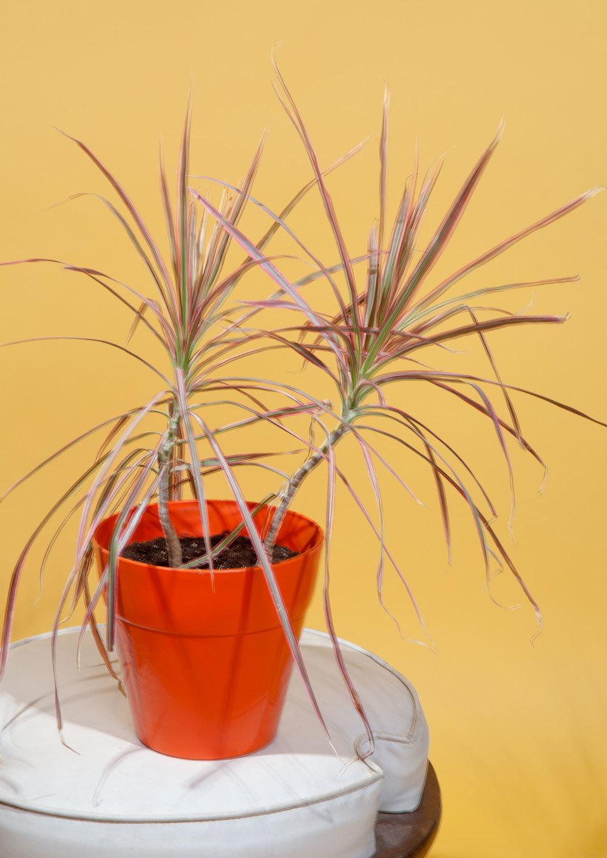 plantweb.jpg