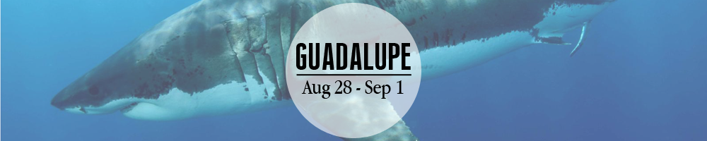 Guadalupe_banner.png