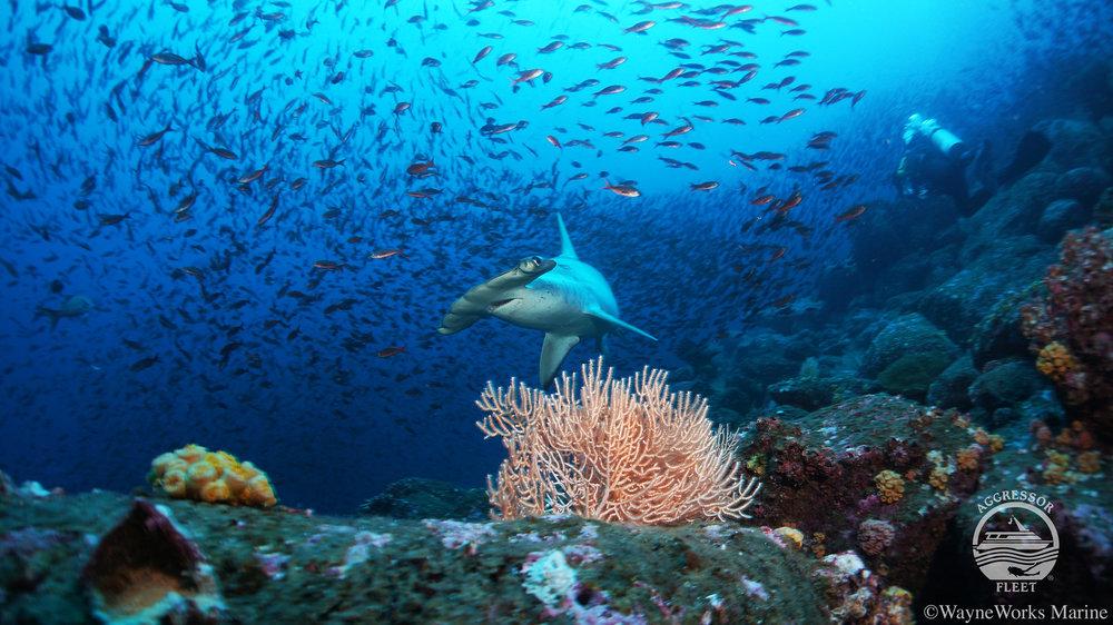 Galapagos-UW14-X2.jpg