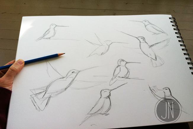jn_hummingbirdsketch.jpg