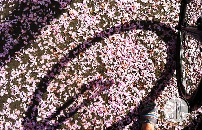 jnewlin_springbiking.jpg