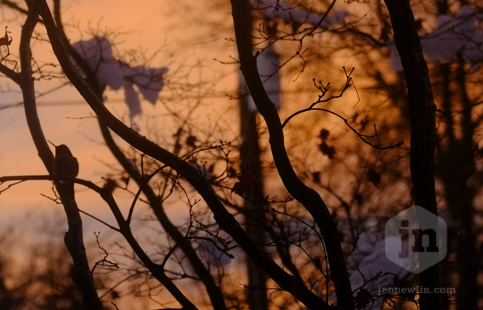 jennewlin_sunrise_hummingbird.jpg