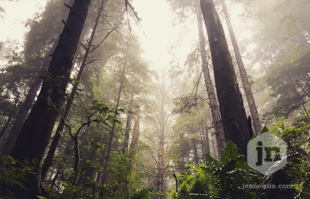 jennewlin_redwoods2017_redwoods.jpg