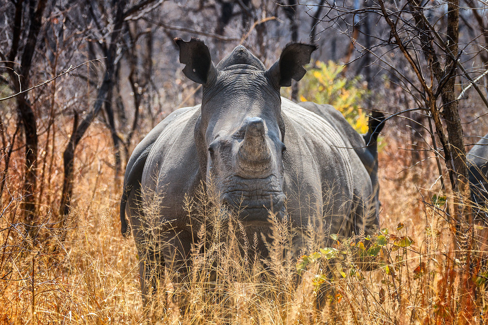 Rhino at  Matobo National Park | 176mm | 1/400th | f6.3 | ISO200