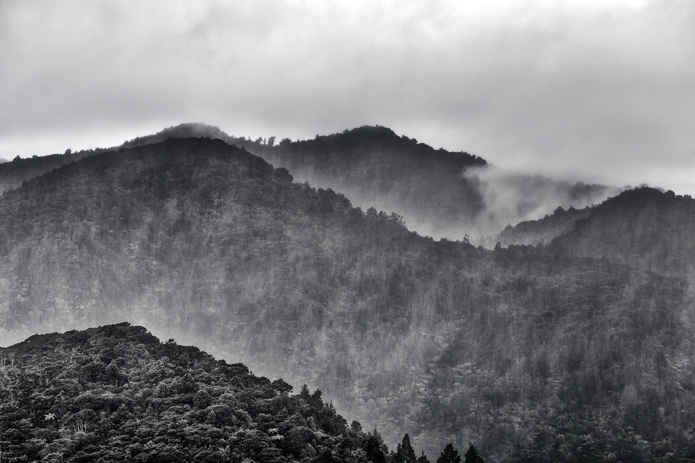 The Waitakere Ranges | 88mm | 1/80th | f8.0 | ISO100