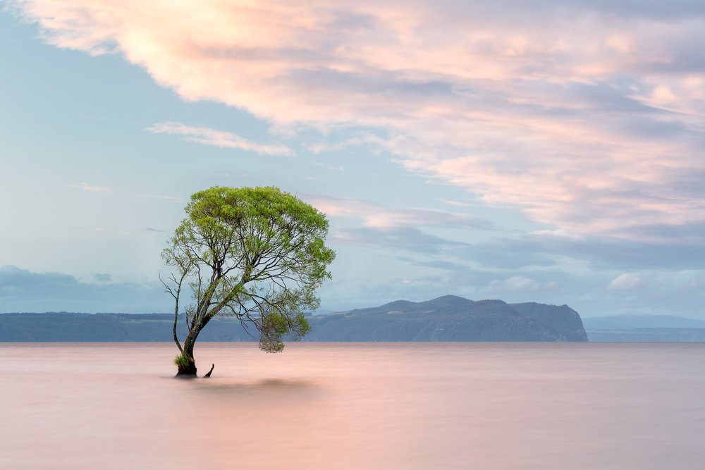Lake Taupo Tree