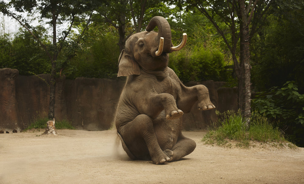 Zoo - BRphoto - 6I5A8924.jpg
