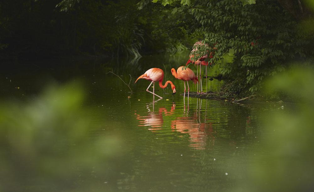 Zoo - BRphoto - 6I5A8761.jpg