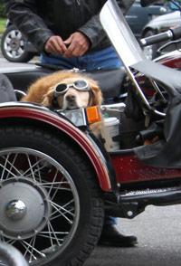 Dog-on-BikeSmall.jpg
