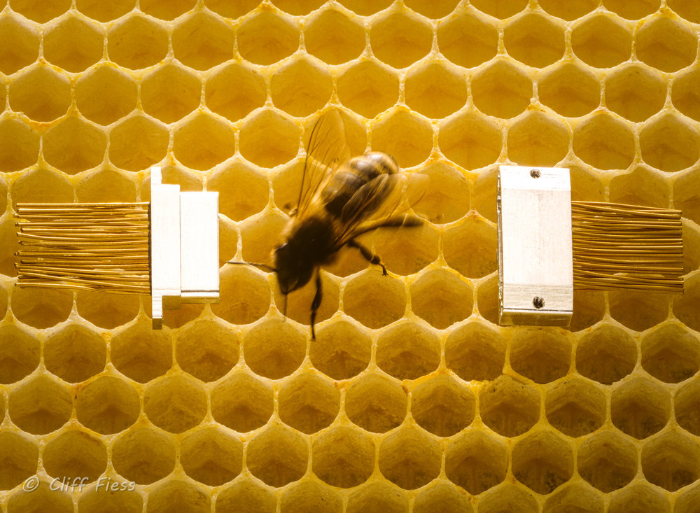 Bee with micro-connector