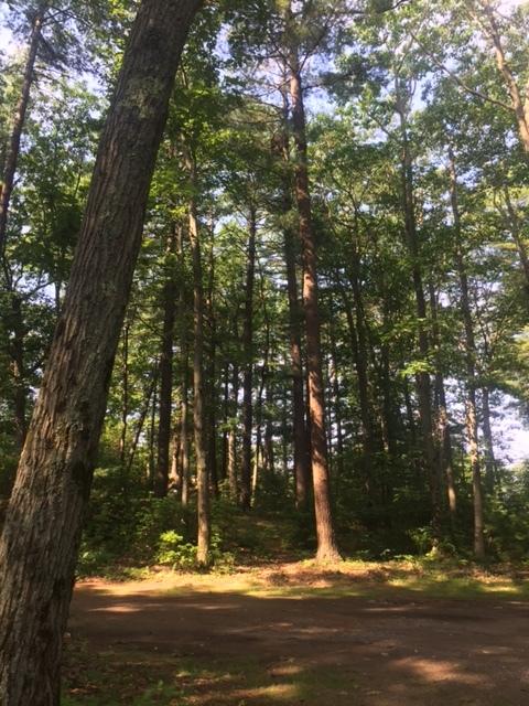 Campe Paradise TreesJPG.JPG