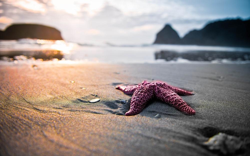 sunsets-closeup-nature-beach-photography-starfish-macro-wide.jpg