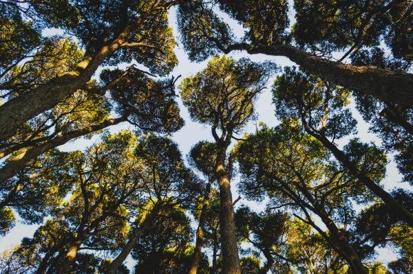 trees_600.jpg