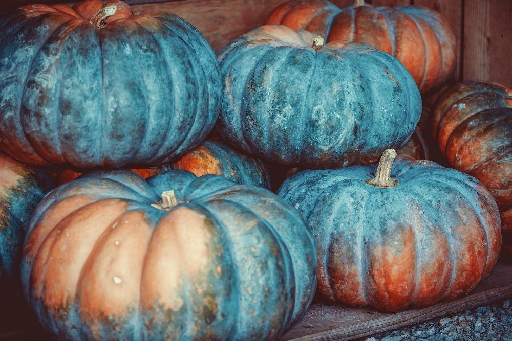 pumpkins_1000.jpg