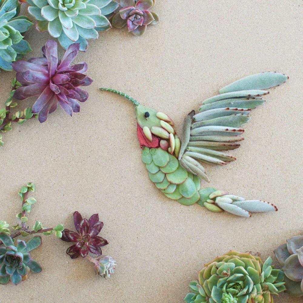 SucculentHummingbird_1000.jpg