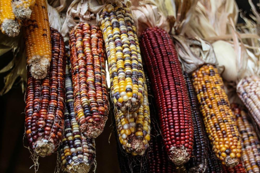 corn_1000.jpg