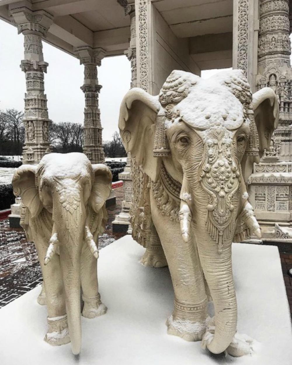 elephants 1000.jpg