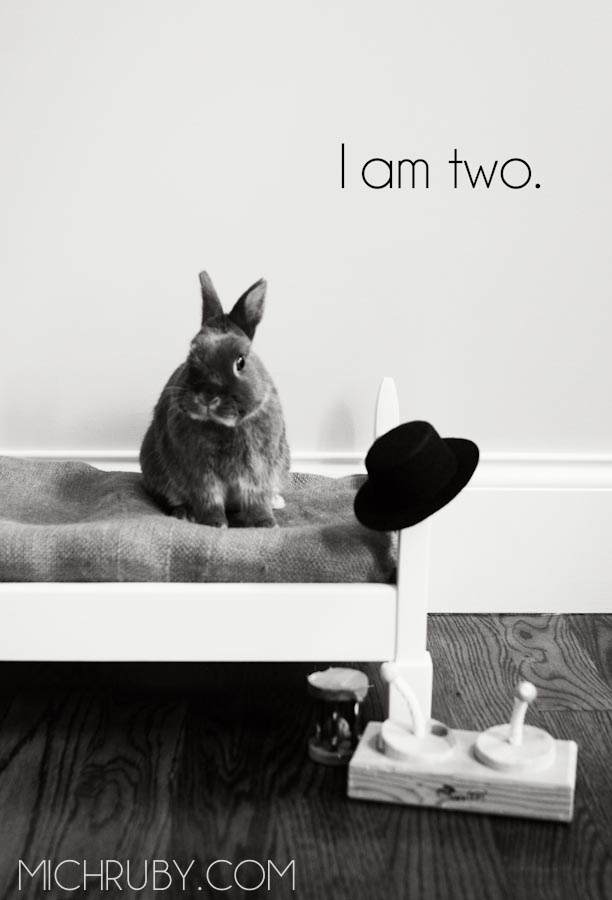 bunnybirthday