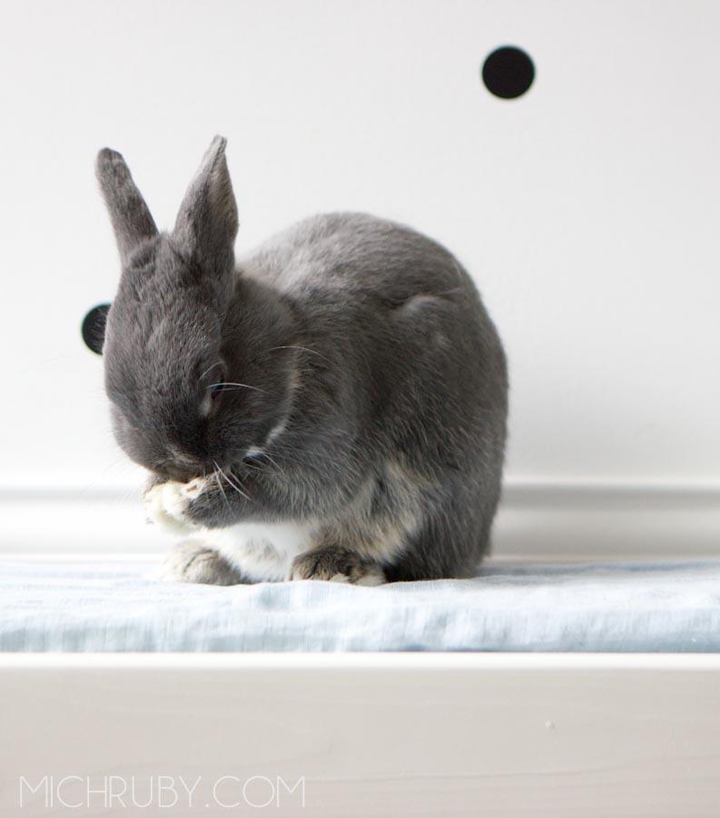 bunnypray