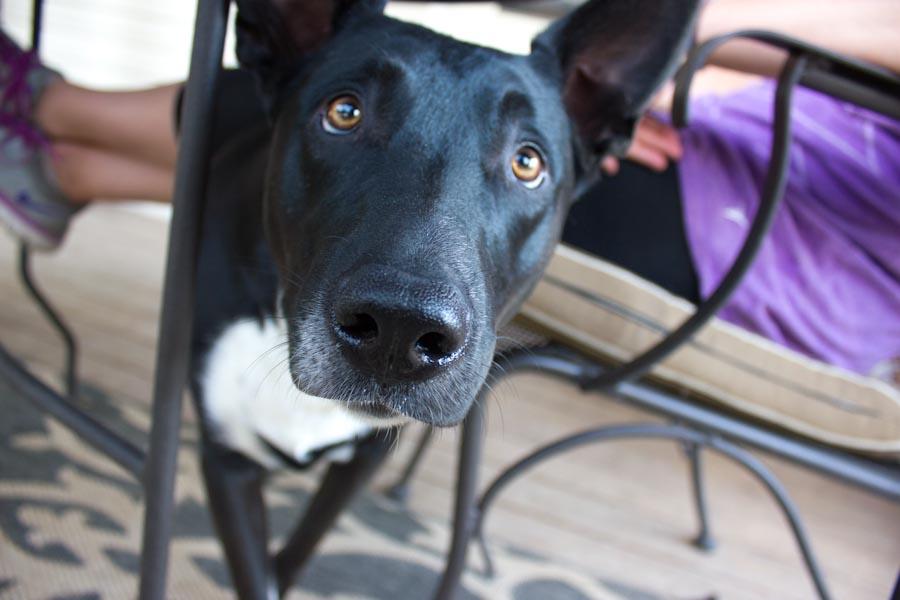 Tux, Britt's dog.