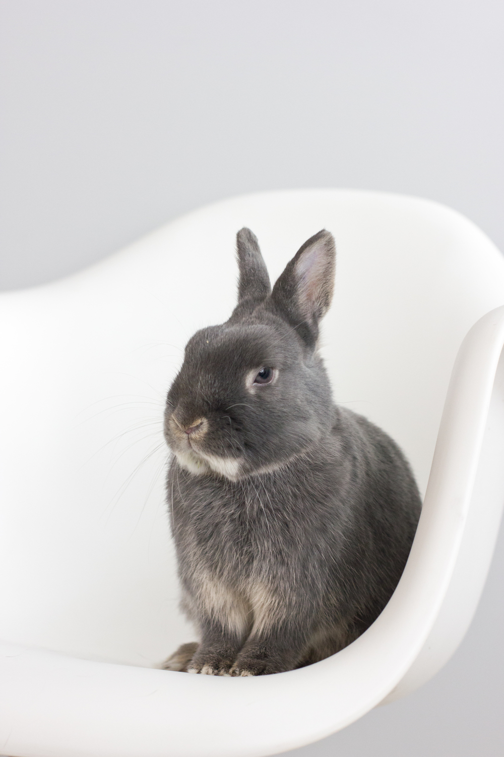 Bunny Pose Long Island Pet Photography | michruby.com