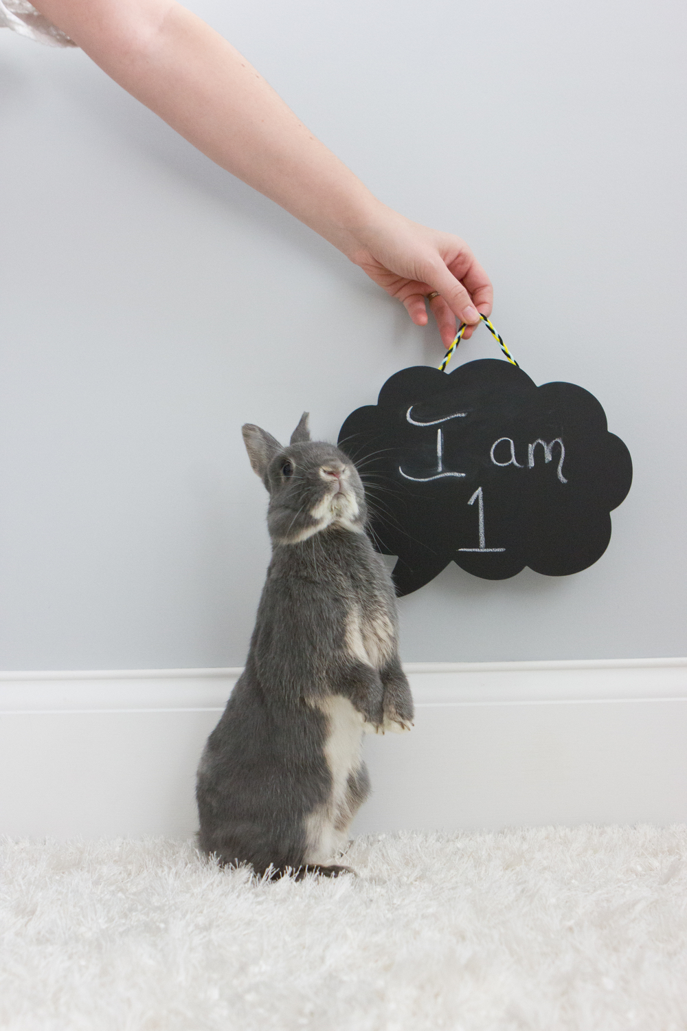 Bunny is One Long Island Pet Photography | michruby.com