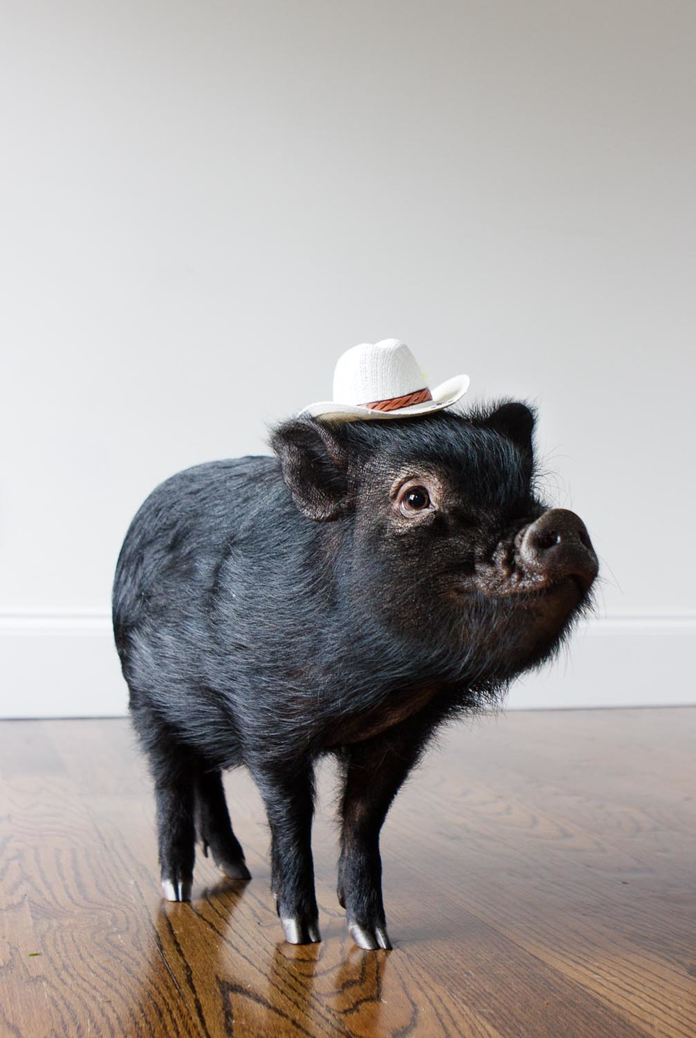 Pig in hat Long Island Pet Photography | michruby.com