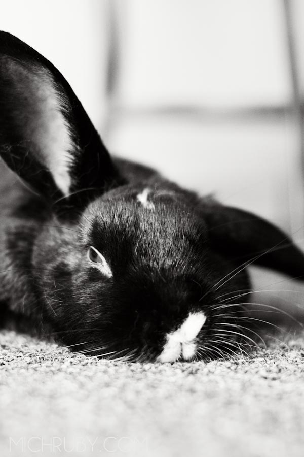 Sleeping bunny Long Island Pet Photography | michruby.com