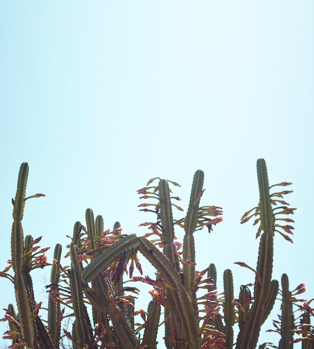 L.A. Vibes | © Hannah Garvin