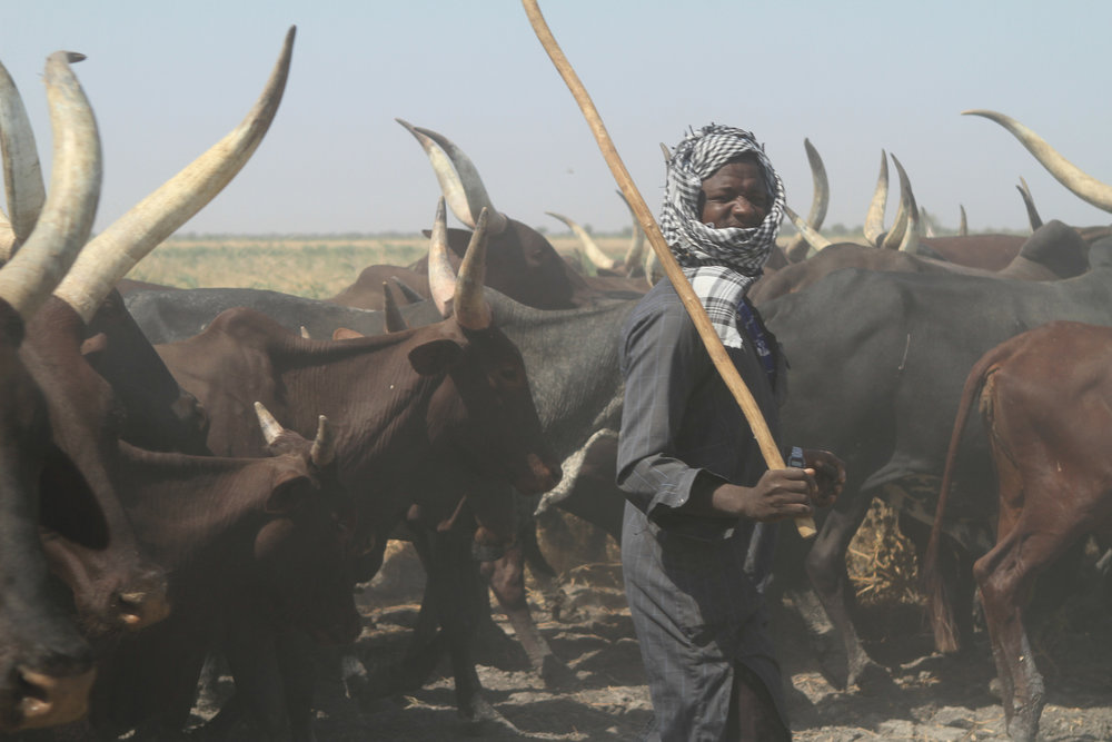 We pass cattle herders on the way.