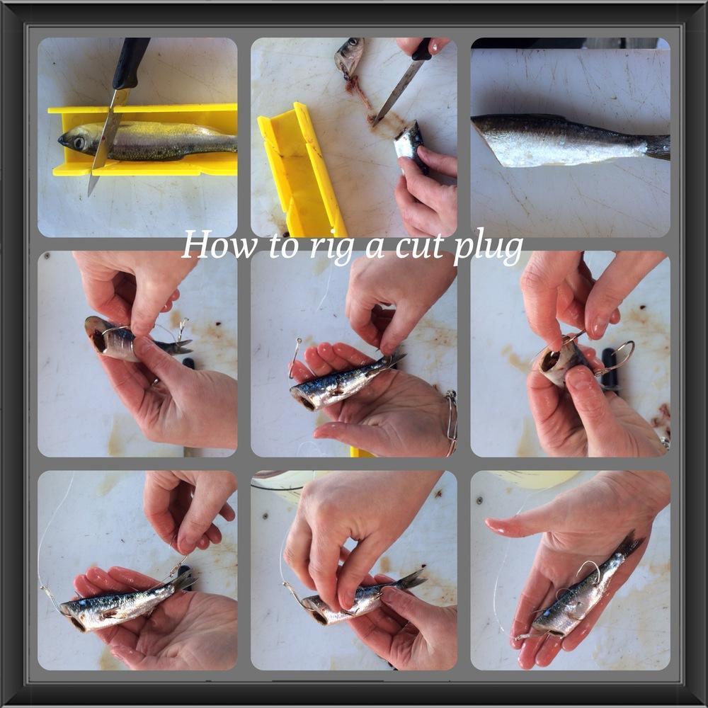 Cut Plug 1.JPG