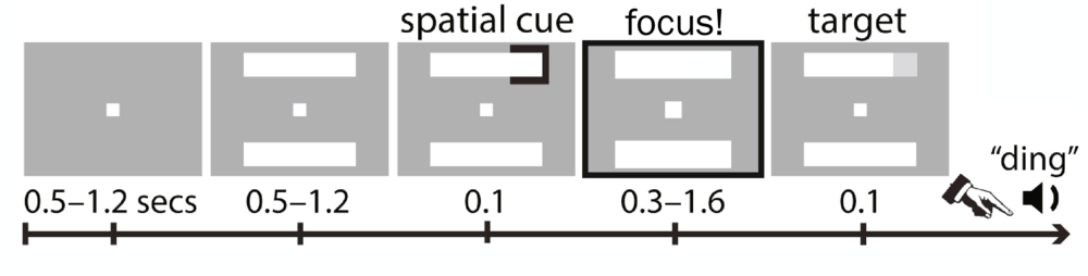 """Figure 1: Attention Game Involving Sharp Focus and Broad Awareness.  To play this game, a player fixes their eyes on the square in the center of the screen, and is given a """"spatial cue"""" signaling where a target (a dim light) is likely to appear (one of the four corners of the screen). The cue then disappears, and players focus their attention on the cued area in anticipation of the dim light target. When the target appears, players press a button to indicate that they detected it. Once in a while, the cue will incorrectly indicate the wrong area, and the dim light will appear in one of the other four corners, so players must balance sharp focus with broad awareness to play this game well. (adapted from Fiebelkorn, 2018)"""