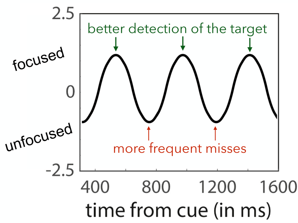 """Figure 2: Attention Fluctuates Between Focused and Unfocused States.  As players attempted to balance sharp focus and broad awareness in the game described in Figure 1, researchers noticed attention fluctuated between focused states (where the target dim light was detected) and unfocused states (where the target was missed, also known as a """"lapse"""" of attention). Depending on when the target appeared relative to the cue, players were more or less likely to detect it. (adapted from Fiebelkorn, 2018)"""