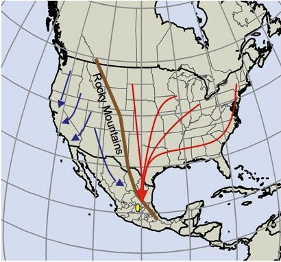 Each year, the monarch butterflies migrate between Canada, the US, and Mexico. Image courtesy the Reppert Lab.