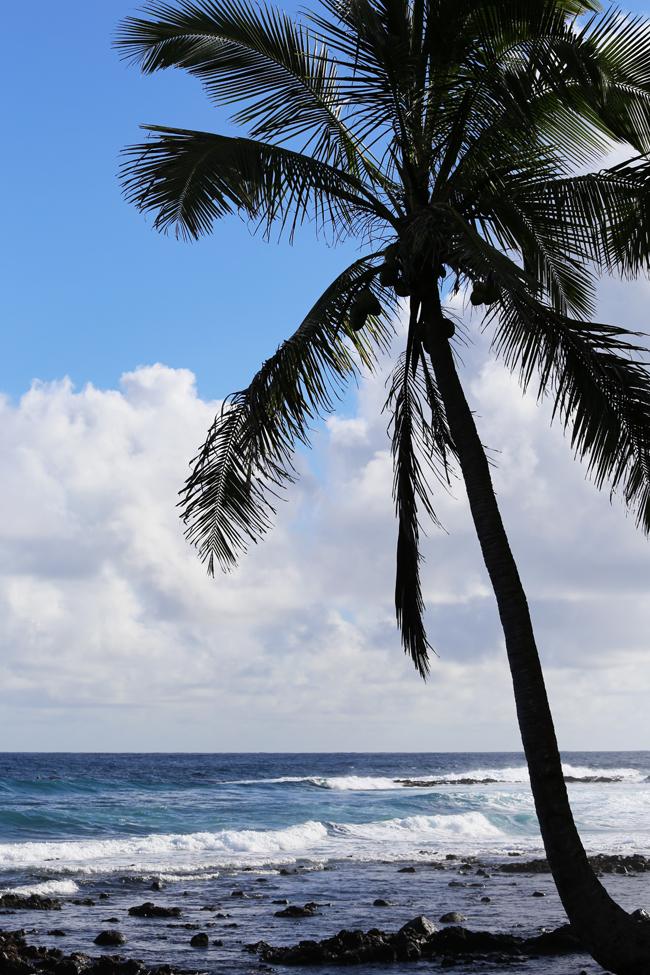 on-the-island-1.jpg