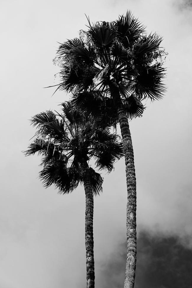 catalina-island-4.jpg